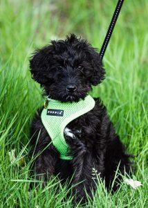 Elena's Puppy